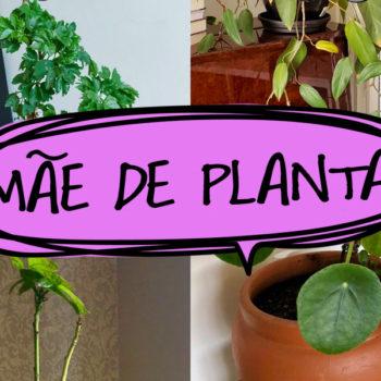 PodFalar: #MãeDePlanta